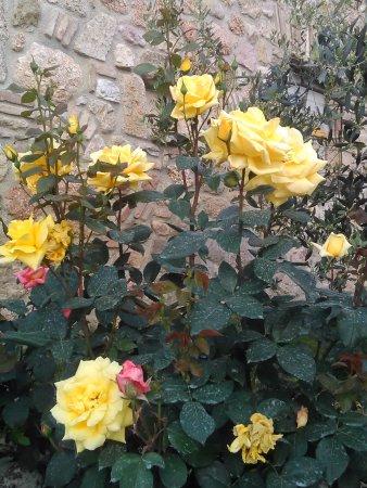 Massa Martana, Itália: fiori ovunque, tutto curatissimo