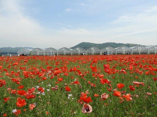 Foto de Sanyo Onoda