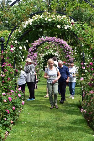 Attleborough, UK: The gardens feature several beautiful rose archways and walkways