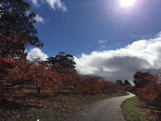Olinda, Austrália: photo2.jpg