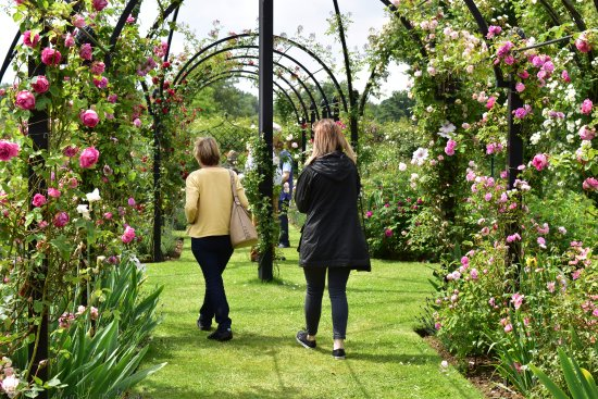 Attleborough, UK: One of the breathtaking walkways and arches within the gardens at Peter Beales Roses