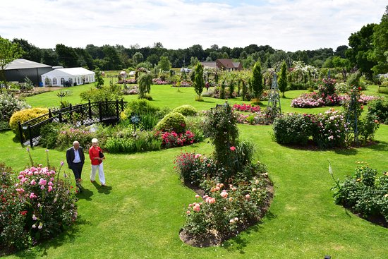 Attleborough, UK: The Peter Beales rose gardens as viewed from the viewing turret