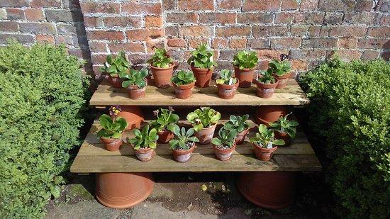 Westbury on Severn, UK: walled garden