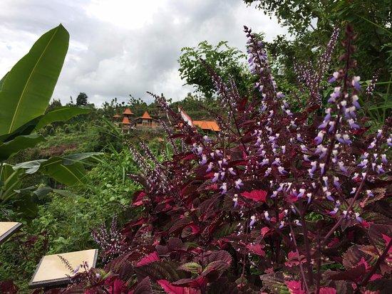 Ловина-Бич, Индонезия: See flowers, rice paddy terraces.
