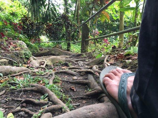 Ловина-Бич, Индонезия: Great hikes through the jungle.