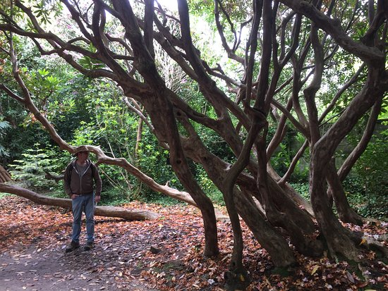 St Austell, UK: striking rhododendrons