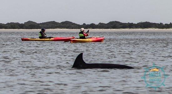 Fernandina Beach, FL: Cumberland Island Doplhin Tour - Kayak Amelia Island with Amelia Adventures