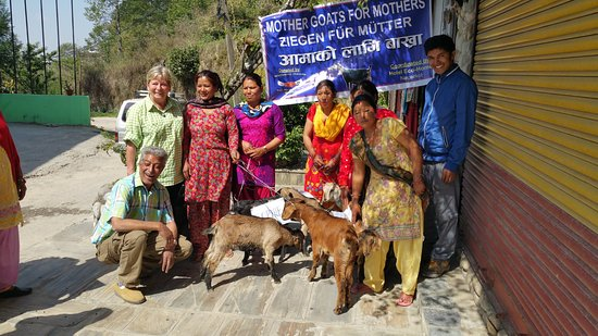 Resort Eco Home: Distribution of goats in from of the Eco Home by ONG