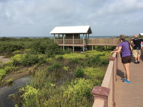 South Padre Island Birding and Nature Center: photo6.jpg