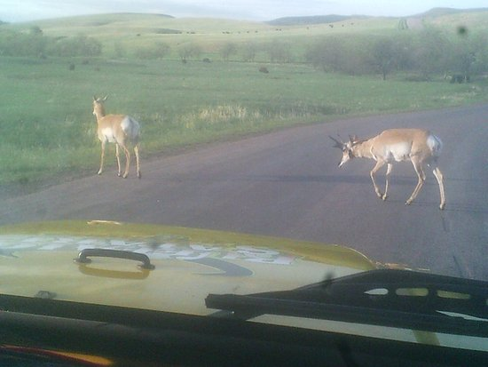 Custer State Park: 'And the deer and the antelope play'
