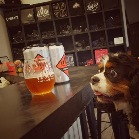 Elmira, NY: Dog friendly at Upstate Brewing!  This is Gemma.