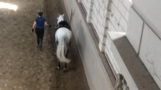 Levend Paardenmuseum De Hollandsche Manege: Pat met Paard Ben