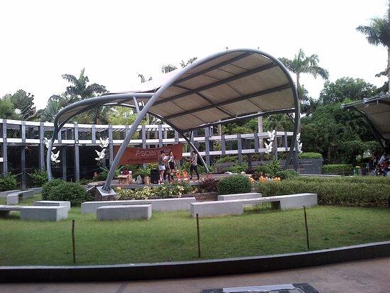 Rainforest Park: Amphitheater