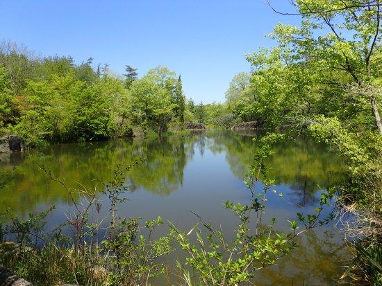 Toki, Japón: 新緑の池
