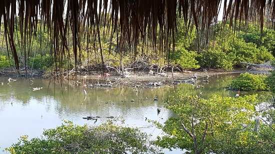 Decameron Isla Palma: Manglar hay flamingos