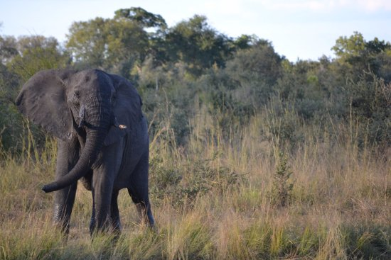 Elephant's Eye, Hwange: Game Drive - Activity