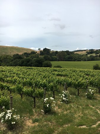 Napa Valley Wine Country Tours: Beautiful!