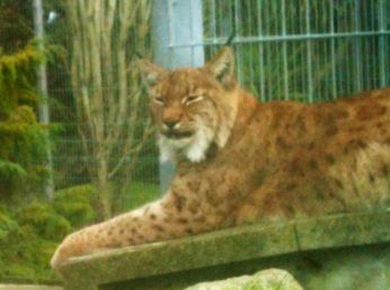 Newquay, UK: Sleepy Lynx