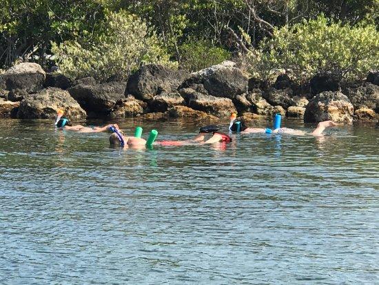 Tavernier, فلوريدا: Snorkeling along the rocks bayside