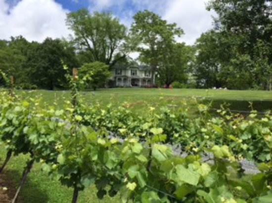 Lovingston, VA: You are welcome to stroll through our vineyard!