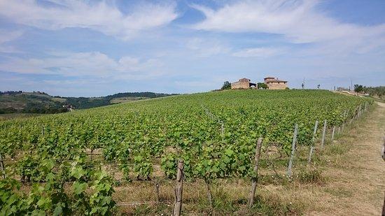 Montagnana Val di Pesa, Италия: DSC_0005_large.jpg
