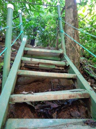 Uvita, Κόστα Ρίκα: Steps to leave