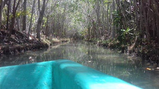 Yucatan, Mexico: Paseo por Veneciia hahaha manglares