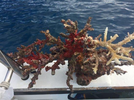 Victoria, Seychellen: выловили из воды