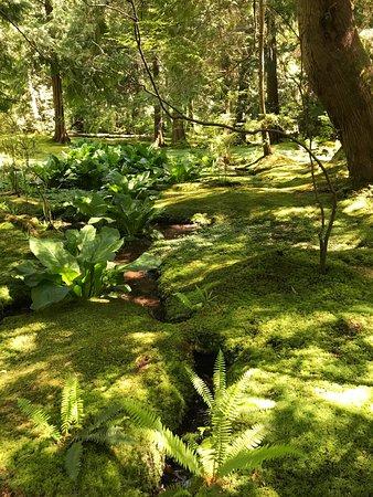 Bainbridge Island, WA: The moss garden