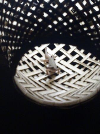 Geckos Dans La Lampe De Terrasse Quand La Nuit Tombe Picture Of