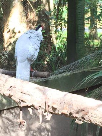 Katikati, Νέα Ζηλανδία: Larger Bird