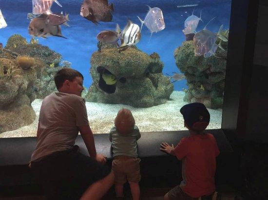 McWane Science Center: Our grands loved the Aquarium exhibit!