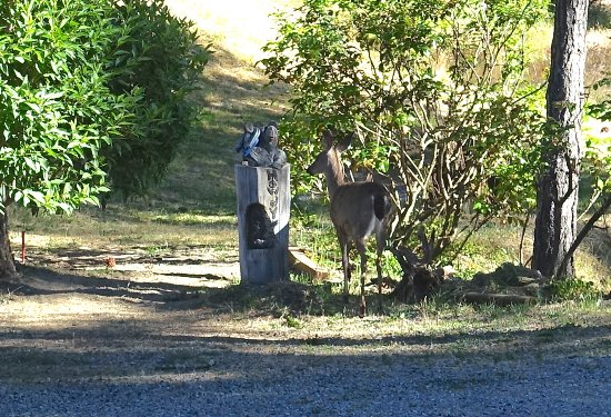 Weaverville, CA: Deer next to cabin