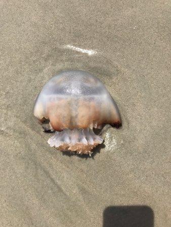 Pawleys Island, Carolina del Sur: photo1.jpg