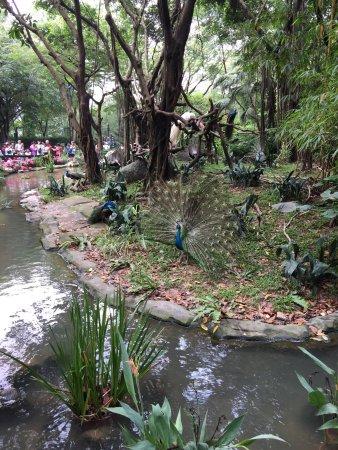 Chimelong Safari Park : photo1.jpg