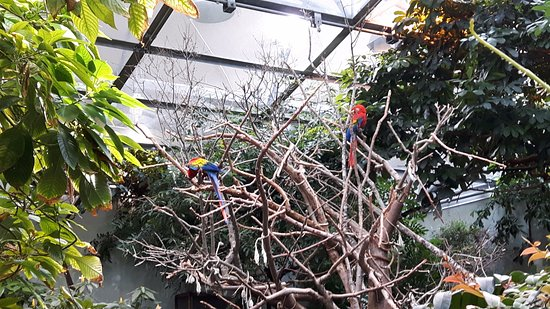 Montreal, Canadá: Macaws in Rain Forest