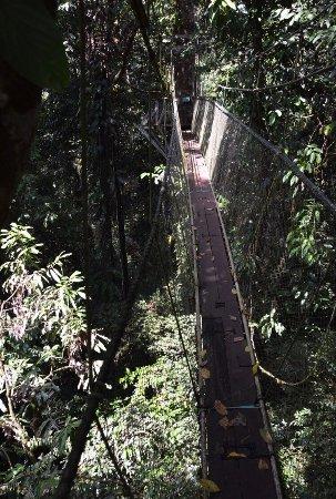 Gunung Mulu National Park, Malasia: photo1.jpg