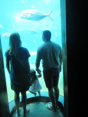 uShaka Marine World: December holiday 2017 410_large.jpg