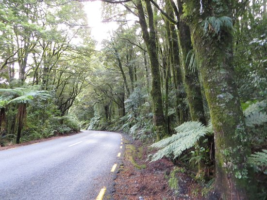 Milford Sound: The forests in New Zealand are magical. Watch out for Hobbits!