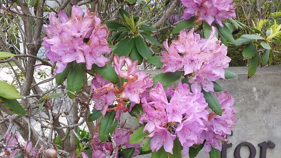 Brevard, Северная Каролина: Rhododendrons
