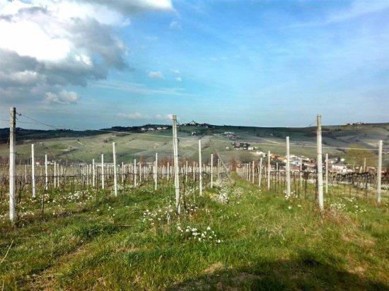 Montecalvo Versiggia照片