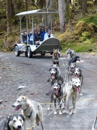 Foto de Dog Sled Discovery & Musher's Camp