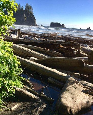 Second Beach Trail: photo1.jpg