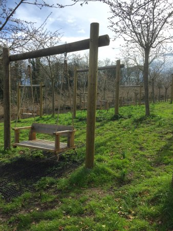 Alnwick, UK: Swings unde the blossom trees