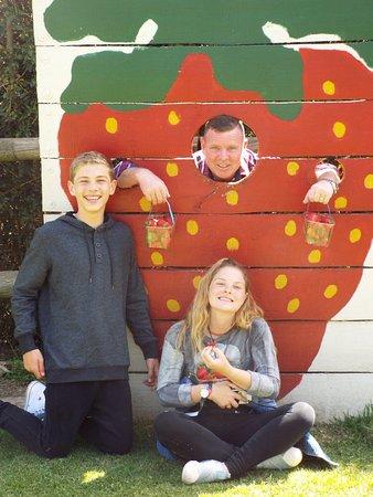 Τζορτζ, Νότια Αφρική: Redberry Farm