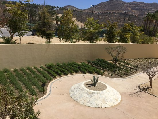 Pueblo Bonito Pacifica Golf & Spa Resort: Fresh Herbs and vegetables growing on the property !!