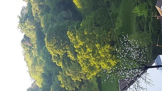 Cwmbran, UK: 20170524_194024_large.jpg