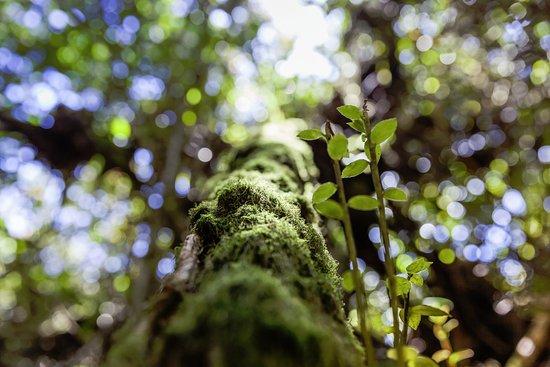 Poas Volcano National Park, Costa Rica: Дерево в нац парке Поас