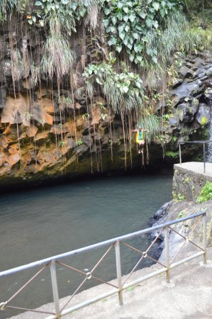Annandale Falls: Guy jumping in the water.. you pay him after