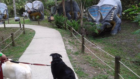 Plant City, FL: Taffy isn't sure what to make of those creatures.